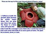 Most Unusual Plants