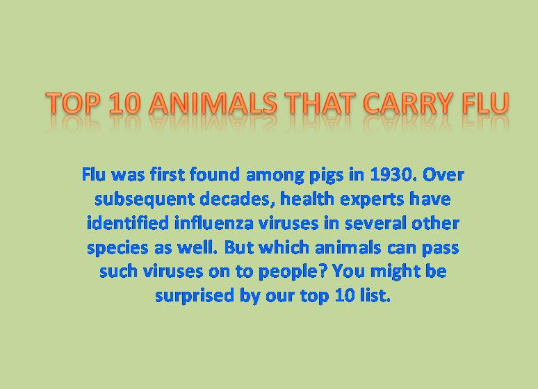Top 10 Animals that carry flu