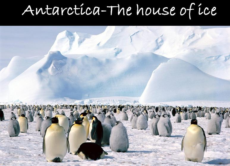 Antarctica-the house of ice