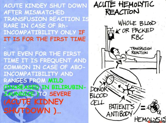 acute kidney shut down after mismatched blood transfusion