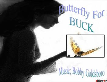 Butterfly for Buck