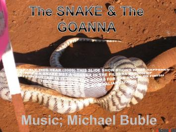 the snake and the goanna