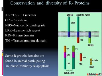 non toll-like innate immune proteins