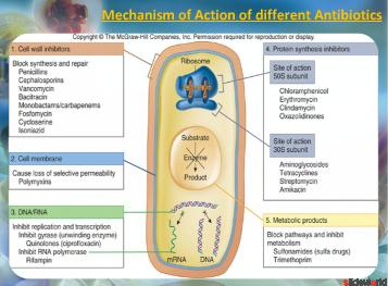 Antibiotics inhibiting Protein Synthesis