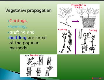 Micropropagation a novel method of Plant Propagation