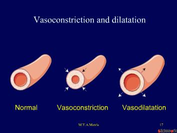 Endothelium dysfunction vs Erectile dysfunction.ppt
