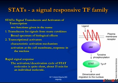 Stat proteins  role of Stat 3 in skin disorders