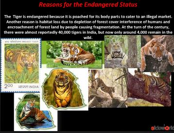 ppt on save tiger