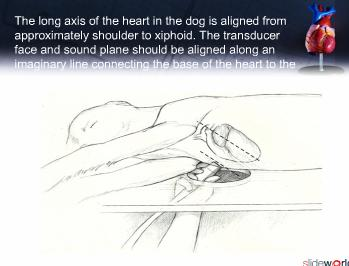 echocardiography in canines