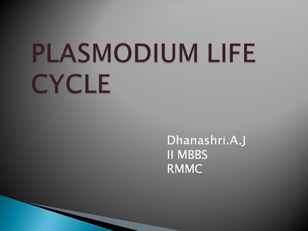plasmodium lifecycle