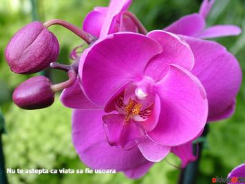 Superb_Orchids