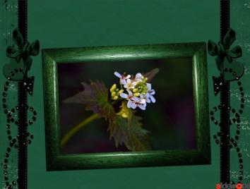 Flower_Frame- Hold a picture of yourself