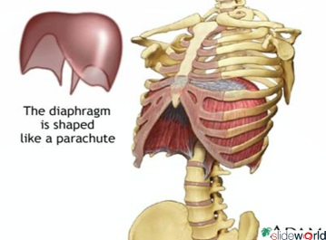 Diaphragmatic Hernia