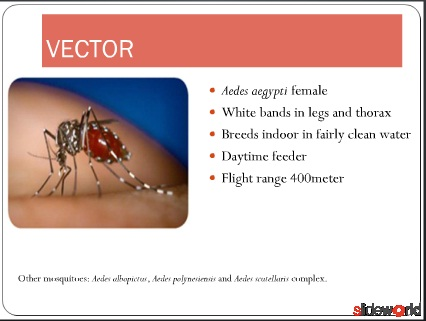 DENGUE ILLNESS IN CHILDREN