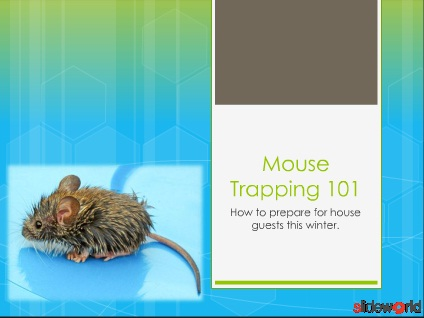 Mouse Trapping 101
