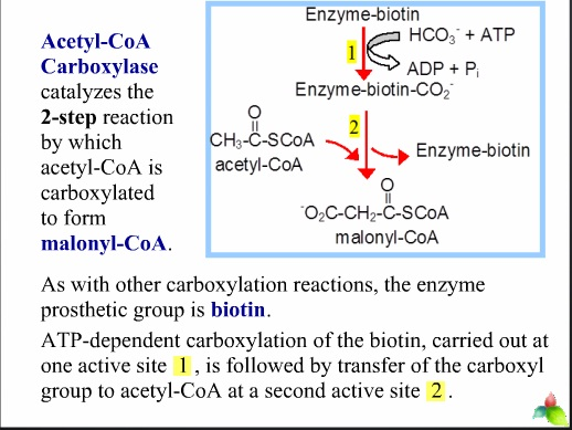 fatty acid syntheses