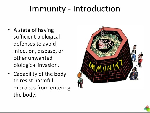 immune system of body
