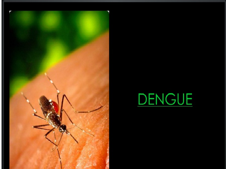 Dengue: A PPT Presentation
