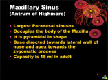 Anatomy and physiology of paranasal sinuses ppt by Dr Manas