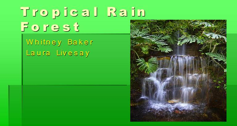 Tropical Rain Forest