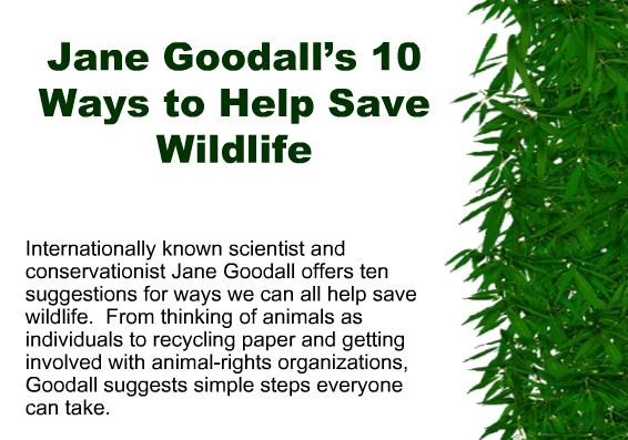 Jane Goodalls 10 Ways to Help Save Wildlife 