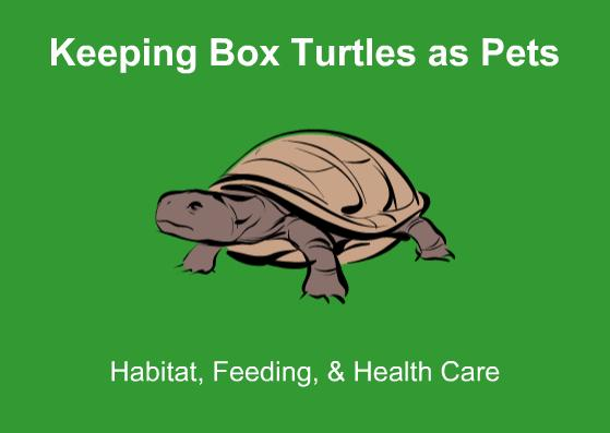 Keeping Box Turtles as Pets