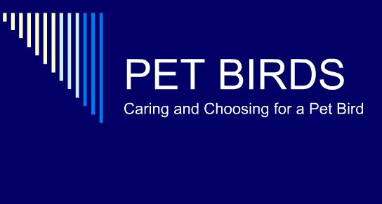 PET BIRDS Caring and Choosing for a Pet Bird