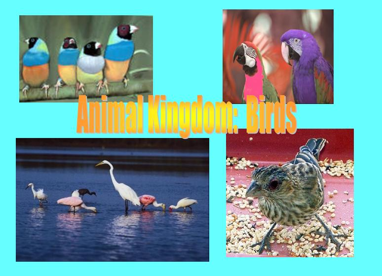 Animal Kingdom Birds