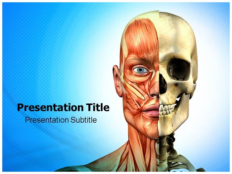 muscle ppt powerpoint templates powerpoint template on muscle