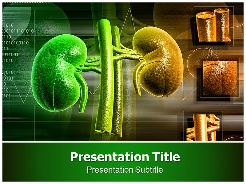 Kidney powerpoint templates powerpoint presentation on kidney template my toneelgroepblik Image collections