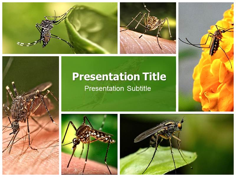 Mosquito pptpowerpoint template powerpoint background on download toneelgroepblik Gallery