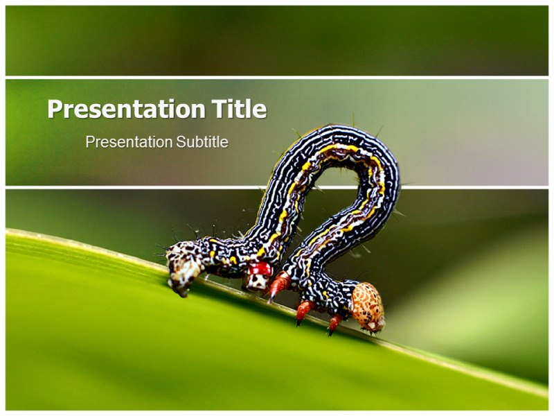 Caterpillar Worm Powerpoint Templates