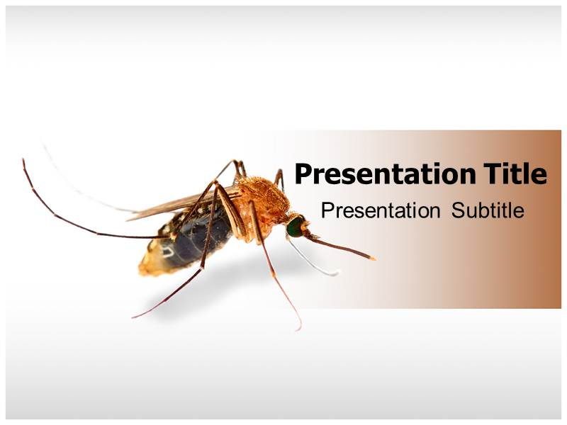 Mosquito powerpoint template ppt backgrounds for mosquito my toneelgroepblik Images