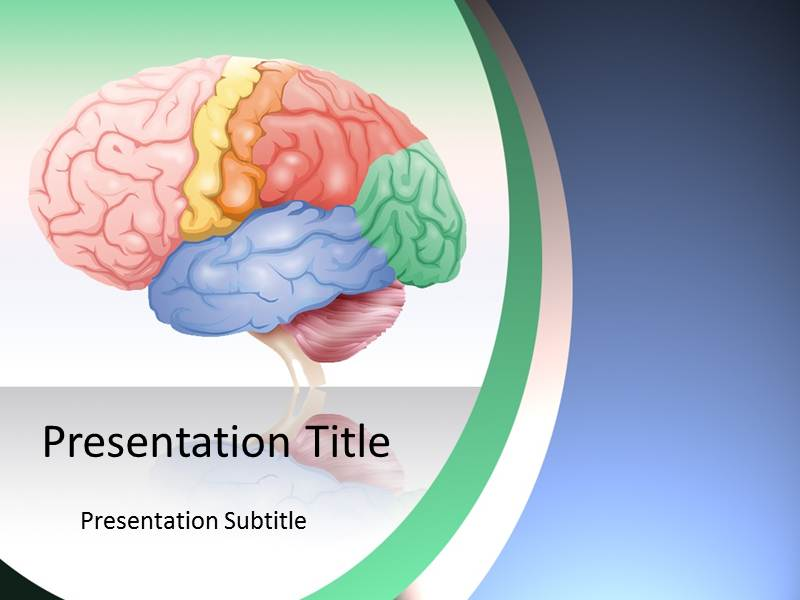 brain anatomy powerpoint presentation | brain anatomy powerpoint, Modern powerpoint