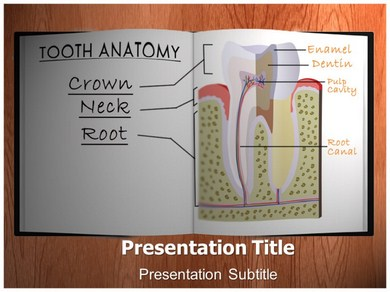 Tooth Anatomy Powerpoint Templates
