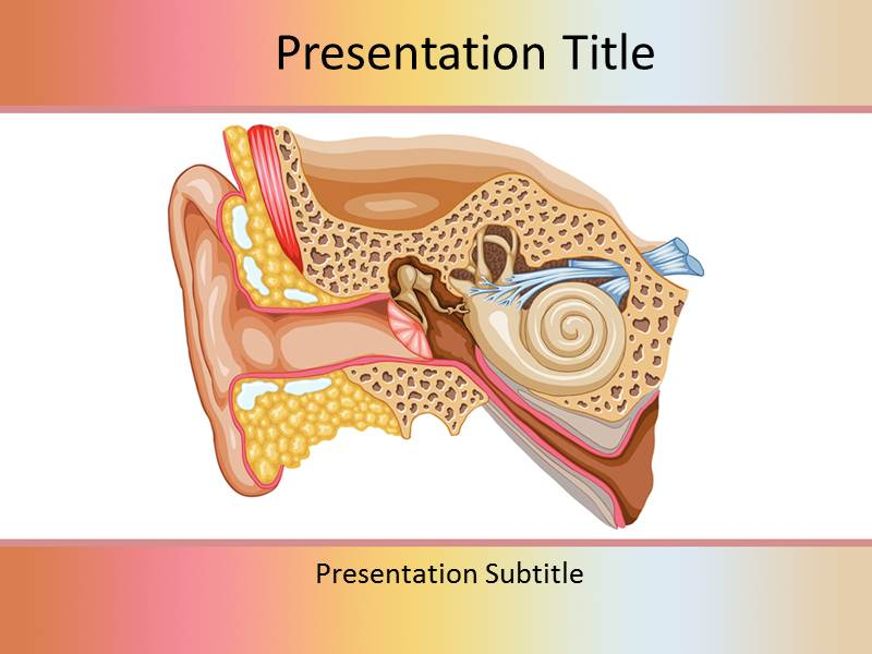 Ear Anatomy of Hearing Templates For Powerpoint