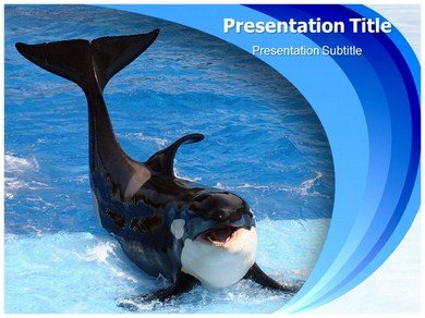 killer whale powerpoint templates | powerpoint presentation on, Modern powerpoint