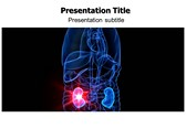 KidneyPowerpoint Templates