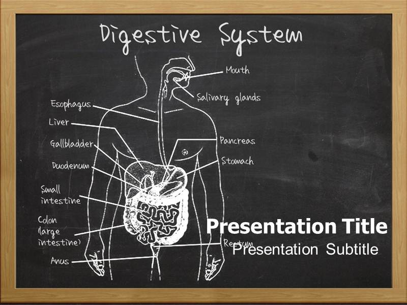 Digestive system organs editable ppt templates interactive ppt download toneelgroepblik Images