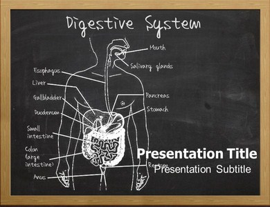 Digestive-System-Organs Templates For Powerpoint