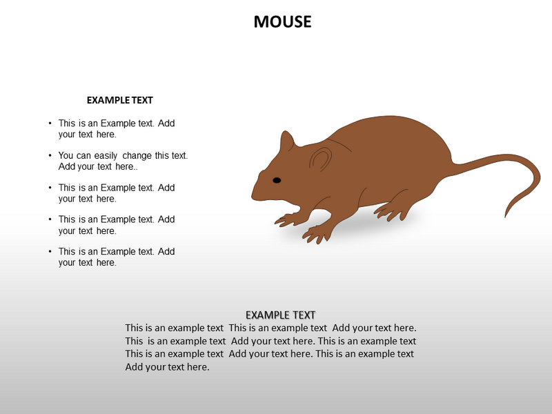Vast Collection Of Animal Biology Powerpoint Template Powerpoint