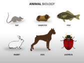 Animal Biology powerPoint template