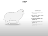 Animal Biology powerpoint theme templates