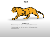 Animal Biology ppt templates