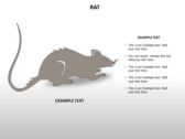 Animal Biology backgroundPowerPoint Templates