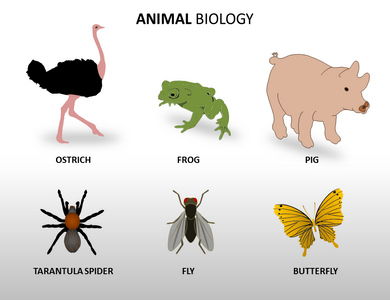 Animal Biology Powerpoint Templates