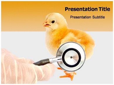 Diseases Of Poultry Powerpoint Templates