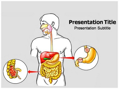 Digestive system powerpoint templates powerpoint presentation on digestive system diseases powerpoint templates toneelgroepblik Images
