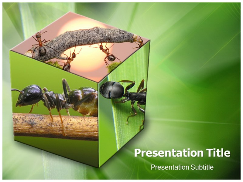 Ant Eaters Powerpoint Templates