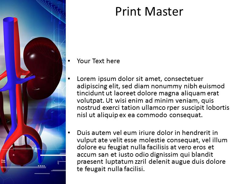 Kidney Structure Powerpoint Templates